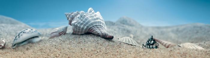 море и пляж (3)