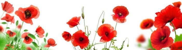 цветы (101)