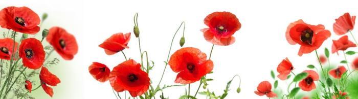 цветы (102)