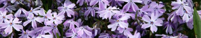цветы (11)