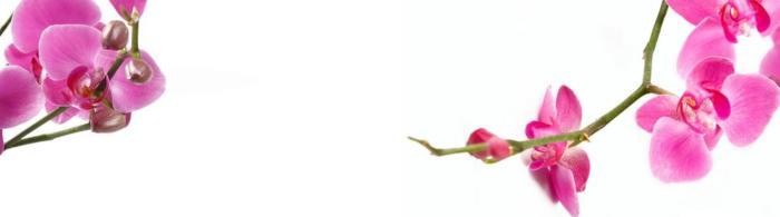 цветы (111)