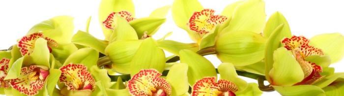 цветы (115)