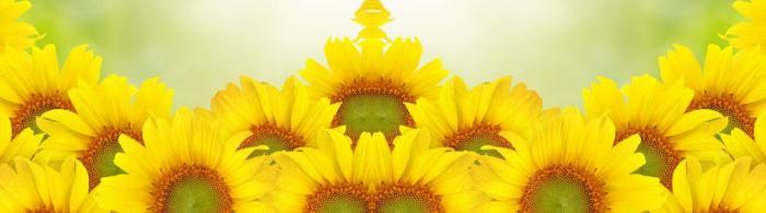 цветы (116)