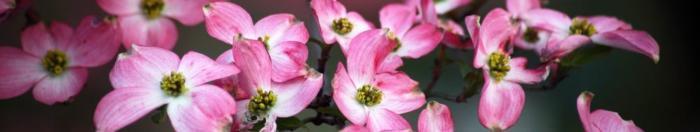 цветы (13)