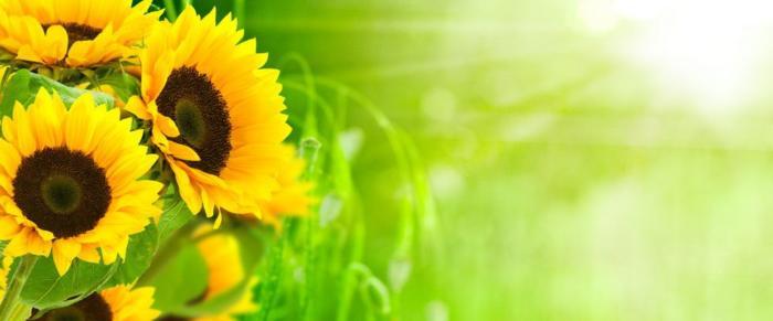 цветы (132)