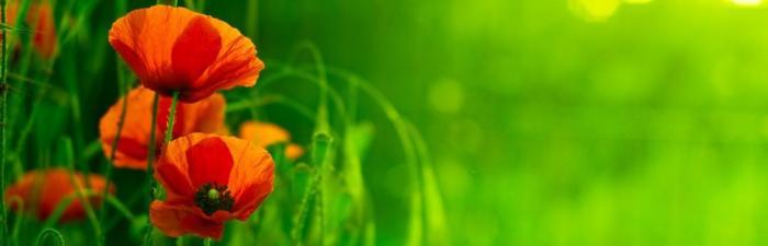 цветы (133)