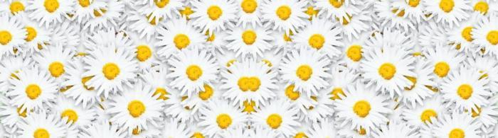 цветы (137)