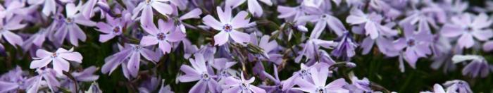 цветы (14)