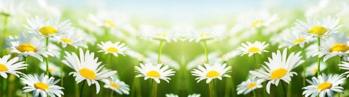 цветы (142)