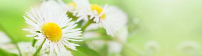 цветы (143)