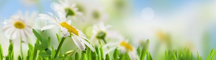 цветы (145)