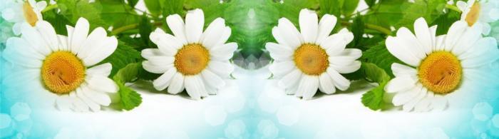 цветы (146)