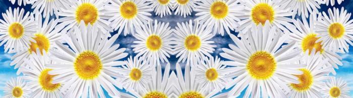 цветы (150)