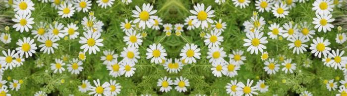 цветы (153)