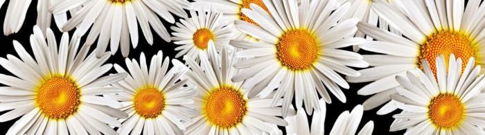 цветы (154)