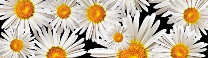 цветы (155)