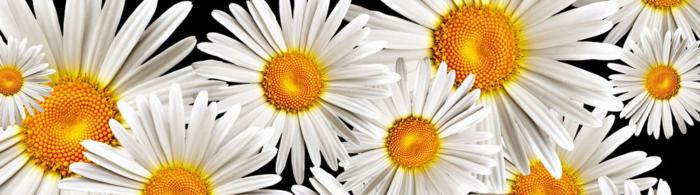 цветы (156)