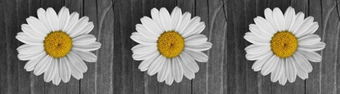 цветы (159)