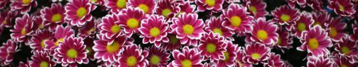 цветы (16)
