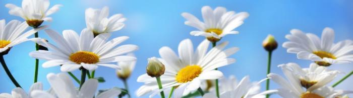 цветы (163)