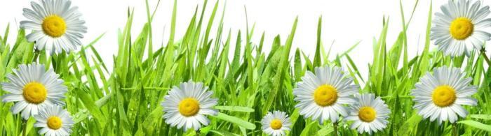 цветы (164)
