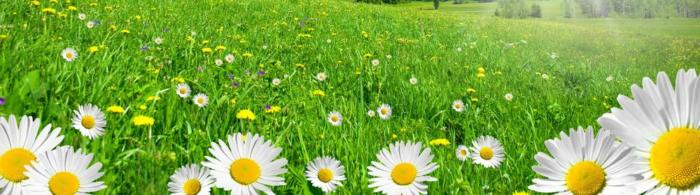 цветы (166)