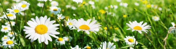 цветы (167)
