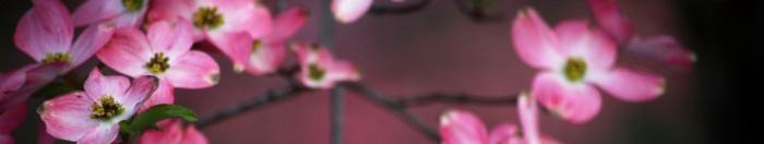 цветы (17)