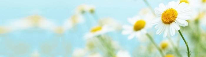 цветы (173)