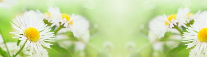 цветы (176)