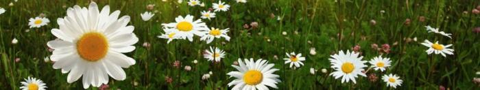цветы (18)