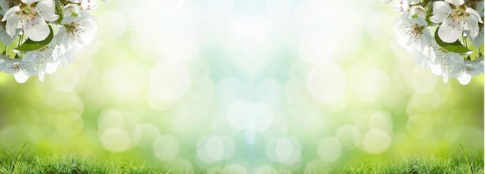 цветы (187)