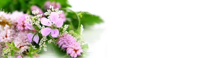цветы (188)