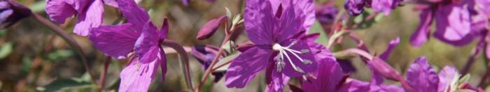 цветы (19)