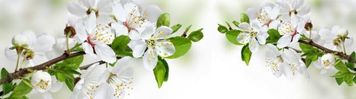 цветы (191)