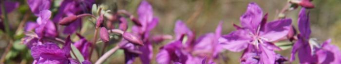 цветы (20)
