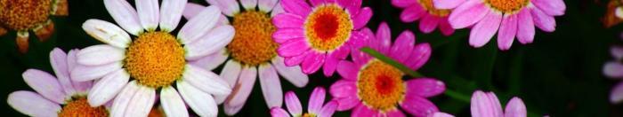 цветы (21)