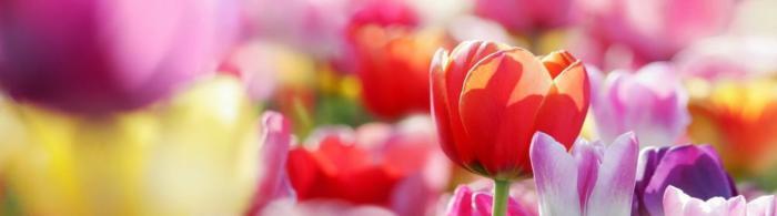 цветы (219)