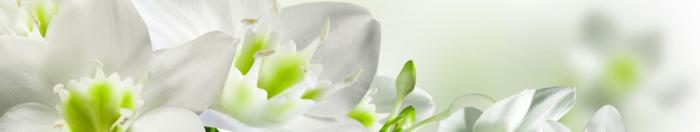 цветы (22)