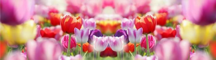 цветы (224)