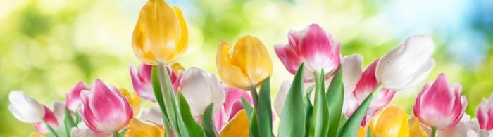 цветы (228)