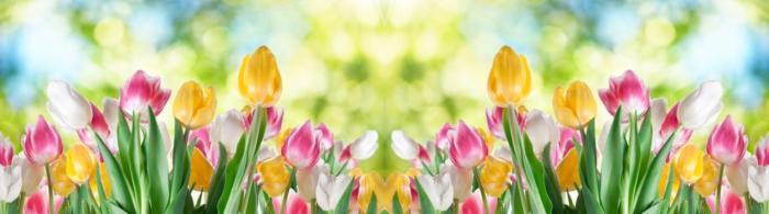 цветы (231)