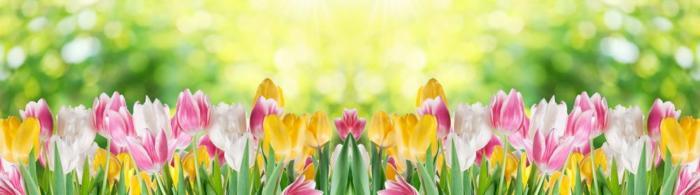 цветы (232)