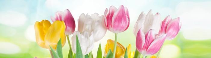 цветы (235)