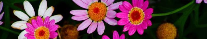 цветы (24)