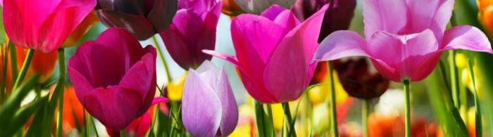 цветы (240)