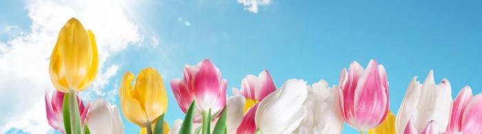 цветы (249)