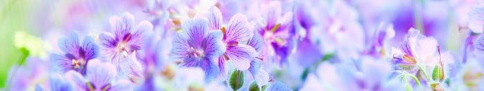цветы (25)