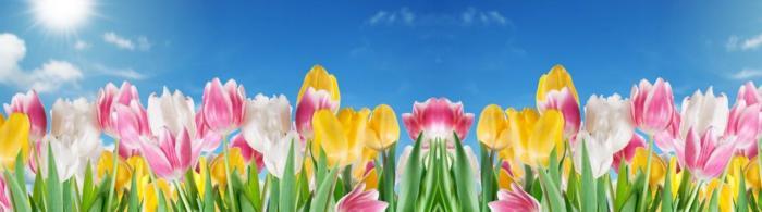 цветы (250)