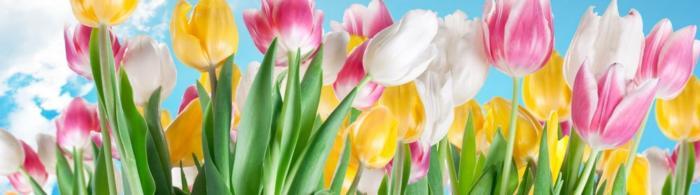цветы (251)